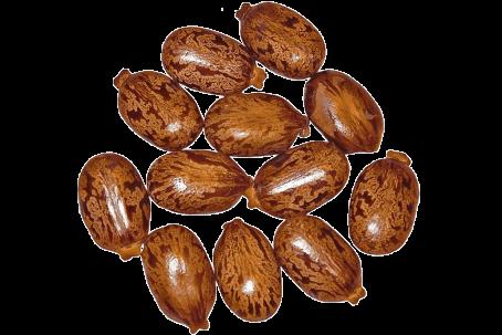 Manteiga Karite | Alquimia Aromatici